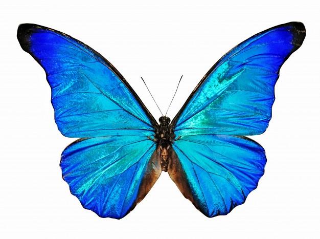Poesía «Mariposa»